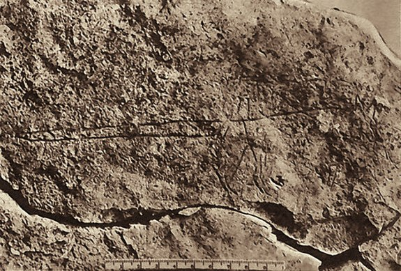 Animal with abnormally long-tail incised into the pavement stone at Megiddo,, Palestine.
